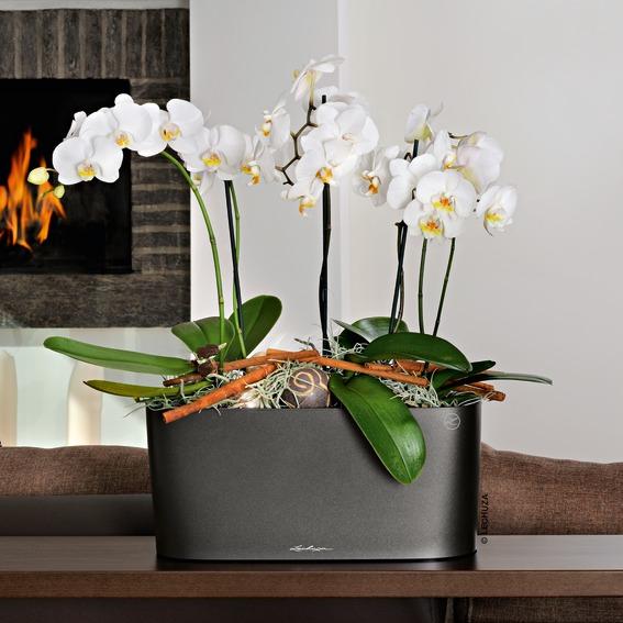 kvetin delta 20 lechuza inteligentn kvetin e. Black Bedroom Furniture Sets. Home Design Ideas